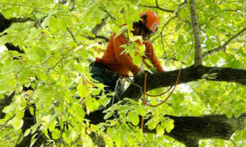 Tree Trimming in Redmond WA Tree Trimming Services in Redmond WA Tree Trimming Professionals in Redmond WA Tree Services in Redmond WA Tree Trimming Estimates in Redmond WA Tree Trimming Quotes in Redmond WA