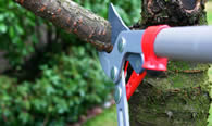 Tree Pruning Services in Redmond WA